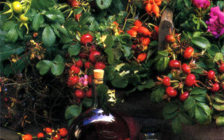 Вино и пунши из роз