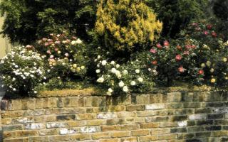 Использование миниатюрных роз