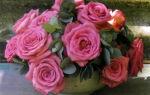 Дюжина роз