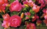 Короны из роз круглый год