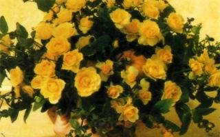 Тыквы и абрикосовые розы