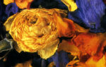 Цитрусовое попурри с ароматом роз