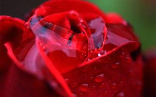 Розовое желе