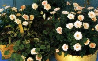 Украшения из миниатюрных роз