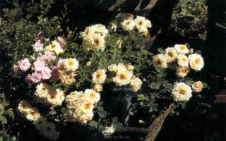 Радость цветущая в керамике