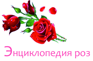 Энциклопедия роз